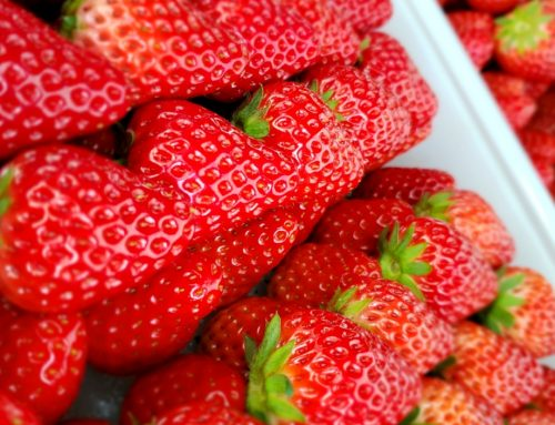 三浦半島の美味しいが集まる5月2日・3日